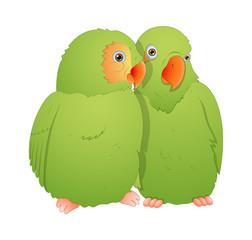 Parrot Bird Pair