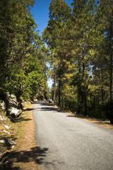 Road through forest, Uttarkashi District, Uttarakhand, India