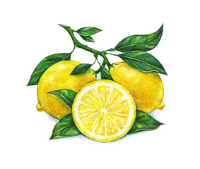 Watercolor drawing of lemon