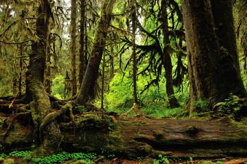 Hoh rainforest, Washington State