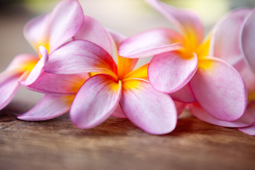 Close up of frangipani