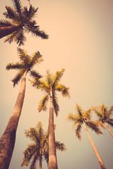 coconut palm tree sunset silhouette vintage retro
