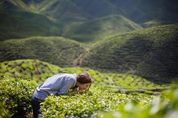 Woman Smelling Tea Leaves