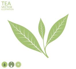 Tea leaf. Isolated on white background