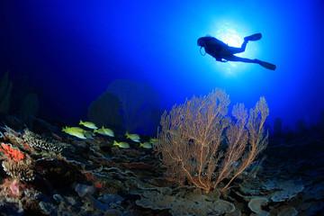 Scuba diver explore tropical coral reef