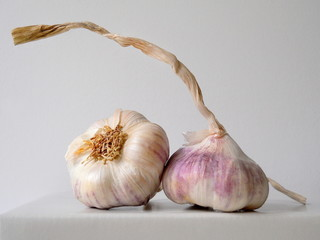 Purple garlic from organic farming. Czech garlic.