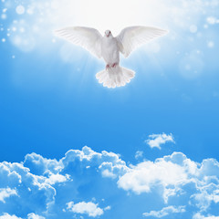 White dove in skies