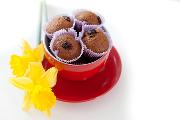 Chocolate muffins with raisins in a cup red