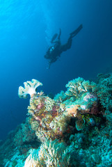 diver going down kapoposang indonesia underwater scuba diving