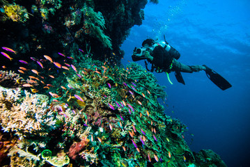 Spoed Fotobehang Duiken diver photo video seafan kapoposang indonesia scuba diving