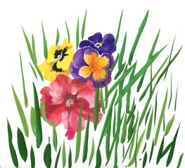 Colorful spring pansy wildflowers illustration