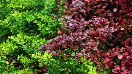 Цветные листья