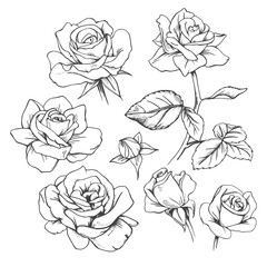 Set of hand-drawn roses. Vector.
