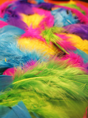 Colorful background made of feathers