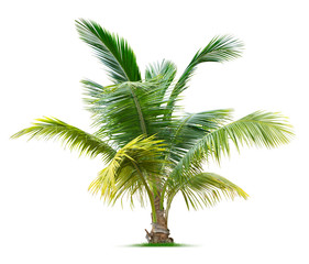 Photo sur Plexiglas Palmier Young palm tree