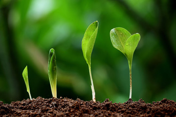 Plant growth-New life