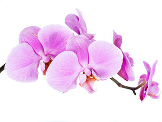 Acrylic Prints Orchid Orchidee isoliert