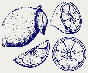 Fresh lemons. Doodle style