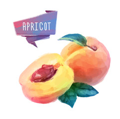 Apricot hand drawn watercolor, on a white background.