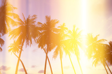 Palm trees on tropical shore at sunset, stylized light leaks