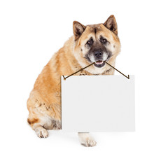 Fototapete - Akita Dog Carrying Blank Sign