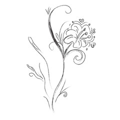 Flover, sketch, hand drawings, vector, illustration