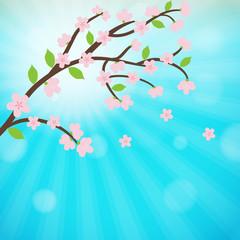 Cherry blossom, sakura branch with  flowers.