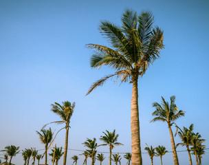 Palms against blue sky