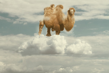 camel floating on a puffy cloud in a sky