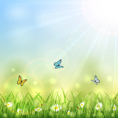 Summer background with butterflies