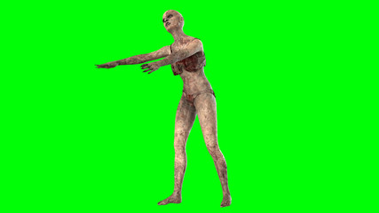 Walking dead zombie woman isolated on green screen