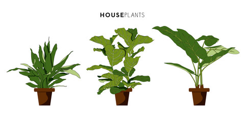 Set of three houseplants with brown plant pot. Vector design.