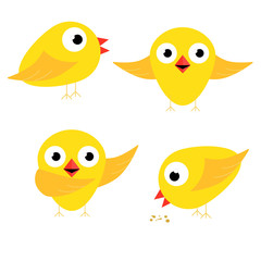 Happy yellow chicken singing bow and eat