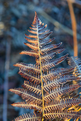 Fern leaf frost in the early morning in a wood