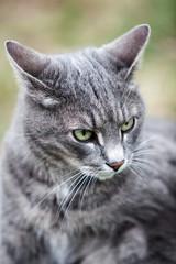 gray kitten playing outdoors