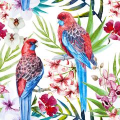 Rosella bird pattern