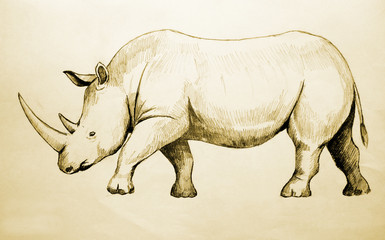 Rhino Sketch, raster version with tracing path