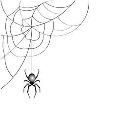 spider web  vector