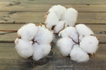 weiße Baumwolle auf Holz