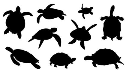 turtle silhouettes