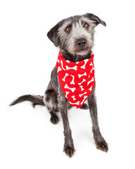 Dog Wearing Red Bone Print Bandana