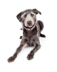 Terrier Crossbreed Wearing Pretty Collar
