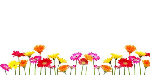 Wall Mural - Blumen Freisteller