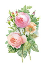 Watercolor pink roses bouquet