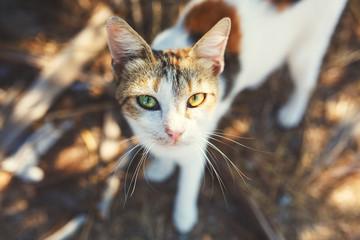 Homeless Cat Portrait on the Street.