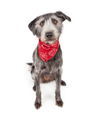 Cute Dog Wearing Red Bandana