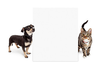 Wall Mural - Dog and Cat Looking Up at Tall Blank Sign