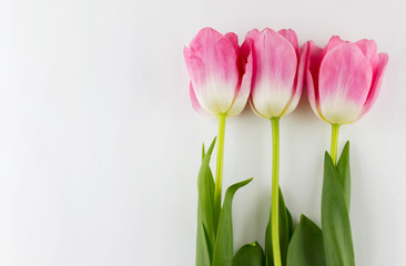 Women's Day concept. Pink tulips on white background