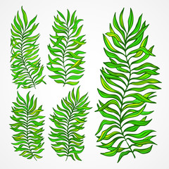 Set of exotic foliage. Vector illustration