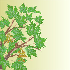 Maple old branch vector